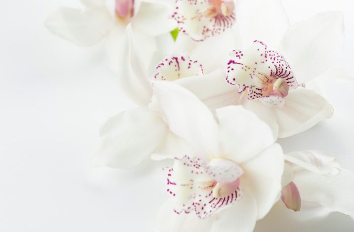 Weekly Photography Challenge – White on White